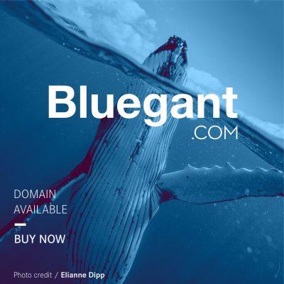 bluegant2589